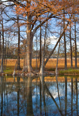 Cypress trees reflecting in the Guadalupe River during the fall. Imagens