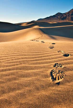 죽음의 계곡 국립 공원에있는 콩과 플랫 모래 언덕. 발자국의 단일 트랙의보기는 카메라를 향해 향했다. 스톡 콘텐츠
