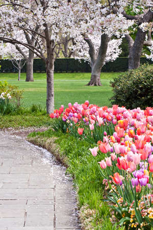 A flowerbed full of blooming tulips adjacent to a path in a park photo
