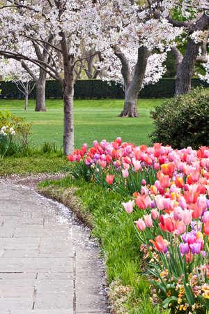 Een bloemperk vol bloeiende tulpen naast een pad in een park