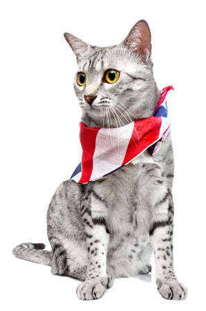 귀여운 이집트 우행 품종 고양이
