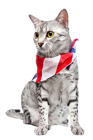 A cute Egyptian Mau breed cat
