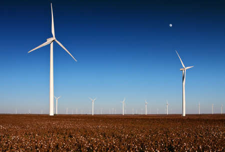 A wind turbine farm in a cotton field in rural West Texas with the moon in the sky photo