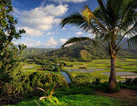 카우아이 하와이 섬에 전통적인 타로 필드를 내려다보기 스톡 콘텐츠