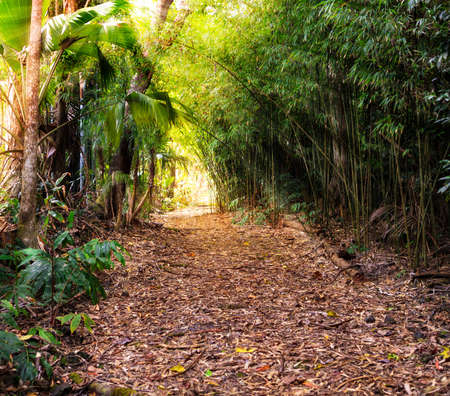 garden path: Rays of sunlight stream through a jungle forest canopy