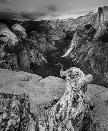 Black and White View of Yosemite Valley from Glacier Point with a dead tree branch in the foreground.