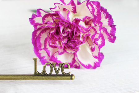 The key to love, Valentines background. Brass antique key with 'Love' detail' and a pretty pink tipped carnation flower set against a distressed white wood background.