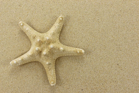 Gold coloured Starfish on golden sand background