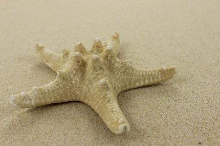 Starfish Close up on golden sand