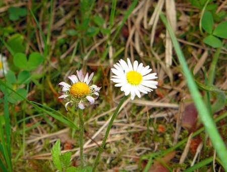 Two miscellaneouses of the flower in wood- daisywheels