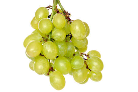Branch of the sour grapes insulated on white background.