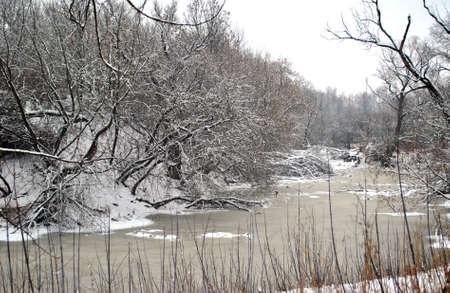riverside tree: The Winter snow landscape  Riverside Tree Stock Photo