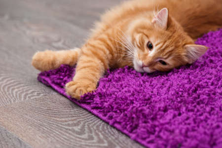 nice and fluffy little kitten lying on a carpet Stock Photo