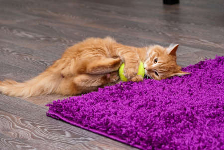 beautiful fluffy little ginger kitten playing with a ball Stock Photo