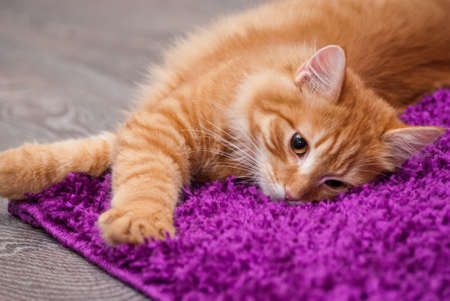 beautiful little fluffy kitten lying on a carpet