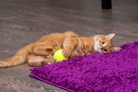 nice and fluffy little ginger kitten playing with a ball Stock Photo