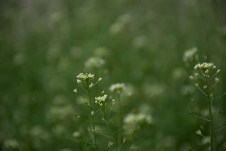 gentle natural summer green background of grass and flowers