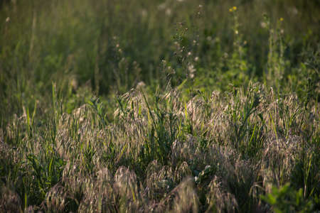 summer sunny natural field grass background Stock Photo