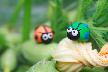grazing: Plasticine world - little homemade green and orange ladybugs sitting on a flowering zucchini, selective focus on the first ladybug