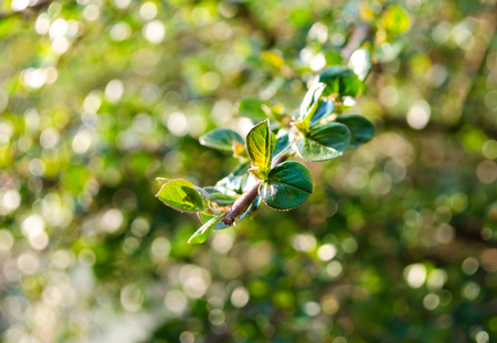 venation: Fresh Green Leaves with beautiful natural bokeh, selective focus, space for text