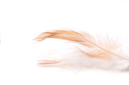 weightless: Feather on light background, close-up, selective focus and place for text