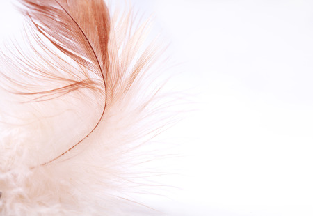 bird wings: Feather on a light background, close-up, selective focus and place for text