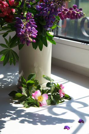 lupines: Pink flowers blooming dogrose and lupines in a vase on a windowsill with beautiful shadows on a sunny day, selective focus on flowers of dog rose