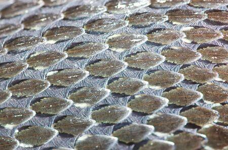 reptile: Grass-Snake skin, reptile texture, macro, selective focus Stock Photo