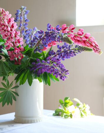 lupines: Still life, white vase with purple and pink lupine on the table, selective focus on Lupines