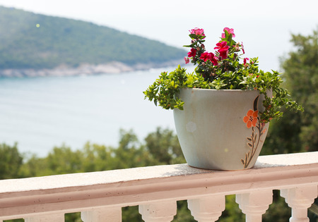 a pot of flowers on the balcony balustrade with a beautiful view of the sea on a sunny day