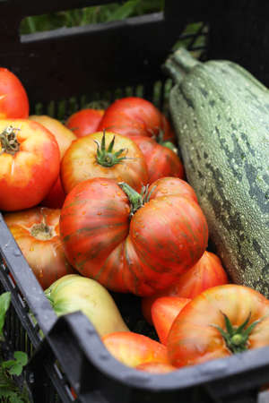 Ripe tomatoes and zucchini in a vegetable box. Selective focus. Standard-Bild