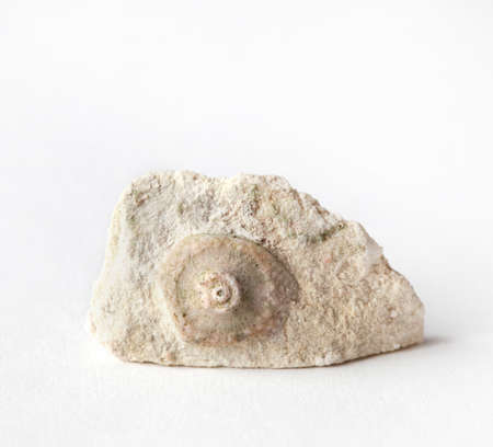 Part of the sea urchin, a Carboniferous fossil in limestone