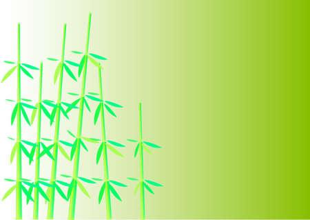 Beautiful bush of a bamboo