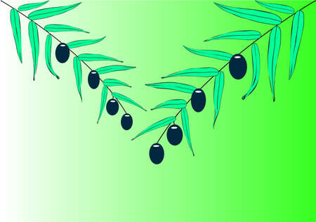 Two olive branches on a green background Vector