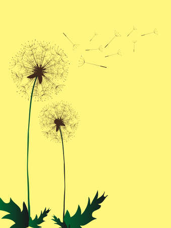 overblown: Dandelion in the Japanese style, background