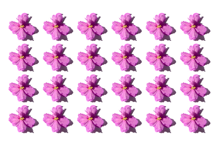 Pink flowers isolated on white background. Flat-lay, overview, holiday, Valentines Day concept Banco de Imagens - 124993271