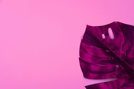 Vibrant bold red tropical monstera leaf on pink background with copy space. Art neon surrealism concept