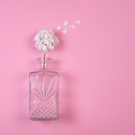Beautiful composition of white geranium flower with petals flying away in glass vase with copy space on pink background. Flat lay, overview, minimal concept 스톡 콘텐츠