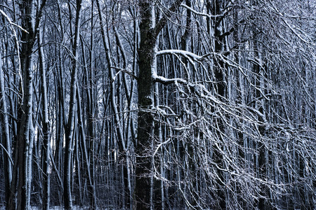 Trees in snow. Forest in winter weather Banco de Imagens - 124995075