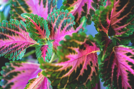 Decorative nettle leaves background nature concept. View from above, flat lay. Green and pink herbs texture