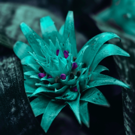 Beautiful neon turquoise bromelia flower. Great background 스톡 콘텐츠 - 124995184