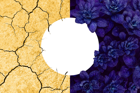Collage of beautiful proton purple leaves and arid yellow earth. Save the planet ecological concept with copyspace