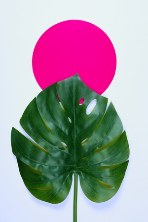 Vibrant bold green tropical monstera leaf on gray background with copy space. Art neon surrealism concept
