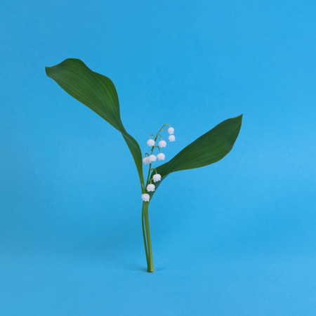 Lily of the valley on a blue background. Art surrealism and minimalism concept. Holiday of lilies of the valley on May 1st. French tradition Banque d'images