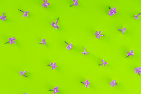 Lilac flowers isolated flat lay backdrop. Floral decoration on yellow surface top view. Simple and cute floral minimalist wallpaper. Blooming and blossoming buds on bright, vibrant background