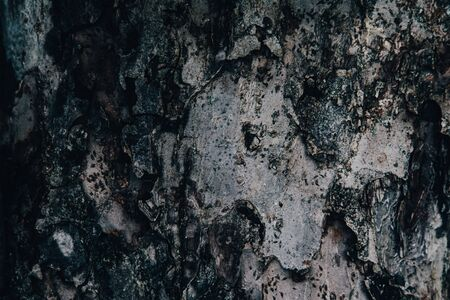 Tree bark texture background. Dry surface. Eco nature concept Banco de Imagens