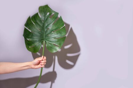Beautiful plant in female hand with shadow. Palm leaf to gift. Spring summer time eco concept. Background with copyspace