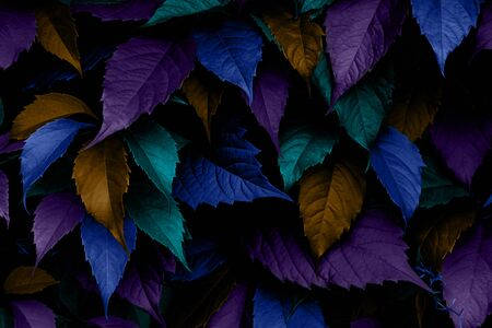 Multicolored leaves top view minimalistic background. Floral backdrop concept. Flower petals close up. Floristry hobby. Web banner, greeting card idea