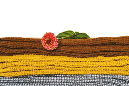 Stack of clean dry towels and flower closeup background. Pile of color cotton blankets, fabric and blooming chrysanthemum composition. Gerbera blossom on textile. Bathing, laundry and hygiene concept