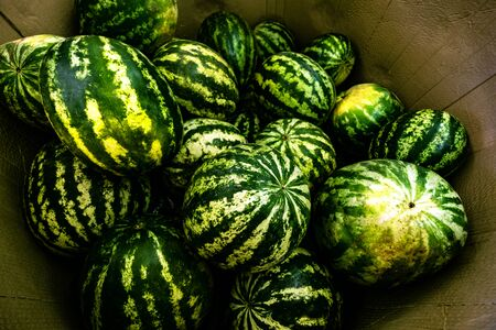 Striped watermelon pile background. Autumn harvesting season. Green ripe melons on farmer market. Delicious eating, seasonal vitamin wallpaper. Healthy nutrition, organic eco product concept Foto de archivo